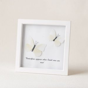white butterfly frame